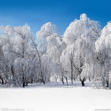 《雪景》后作文